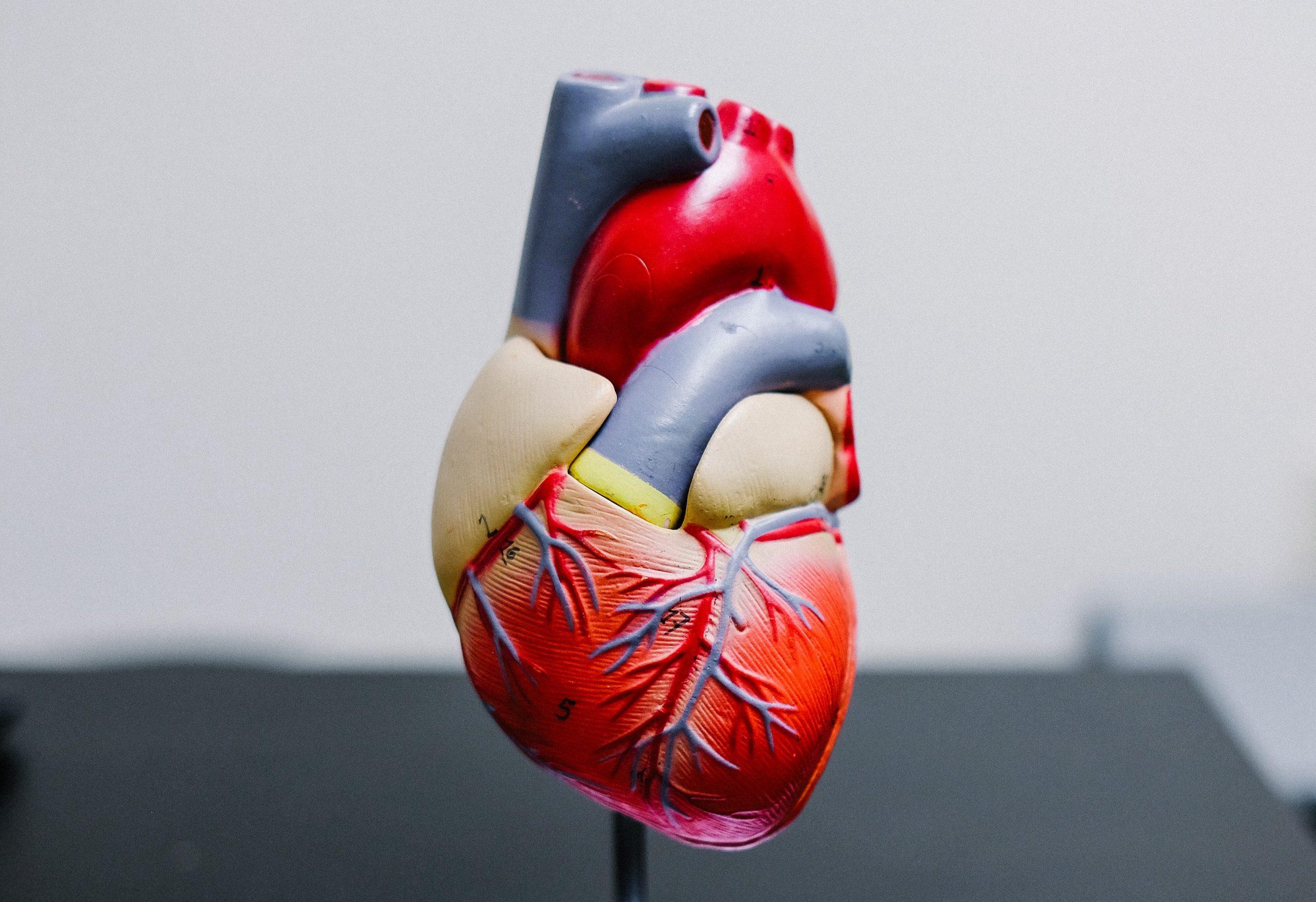nem szívkoszorúér betegség ahol gyakori